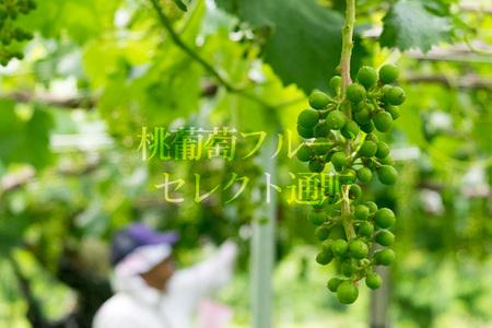 160609_04.jpg