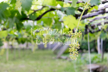 IMG_160603_04.jpg