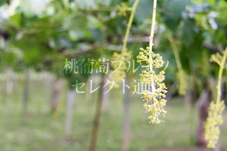 IMG_160603_05.jpg