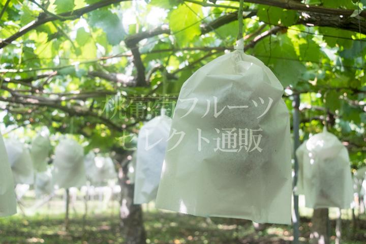http://xn--pckxa0as5d4gj9j2056c98pch3ae14ehhk.com/blog/img/190819-04.jpg